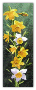 Flowers DAFFODILS Counted Cross Stitch Chart